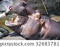 天竺寺動物園 河馬 動物 32683781