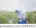 딸기 농가 32691952