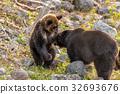 知床棕熊3 32693676