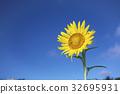 向日葵 花朵 花卉 32695931
