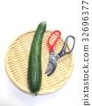 summer, cucumber, cucumbers 32696377