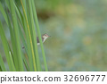 Bird perching on green leaf in garden 32696777