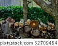 나무, 장작, 32709494