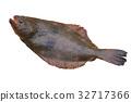 挣扎 比目鱼 鱼 32717366