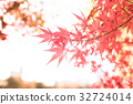 red, leafe, autumn 32724014