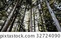 ป่าซีดาร์ 32724090