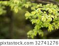 잎, 봄, 픽트 32741276