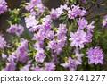 꽃잎, 꽃, 진달래 32741277