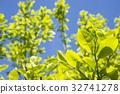 잎, 푸른, 녹색 32741278