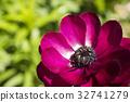 꽃, 피는, 녹색 32741279