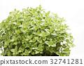 녹색, 잎, 배경 32741281