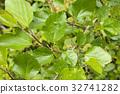 꽃, 잎, 녹색 32741282