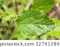 잎, 녹색, 과수 32741284