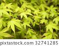 녹색, 잎, 환경 32741285