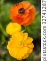 꽃, 녹색, 라 32741287