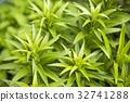 잎, 녹색, 잔디 32741288