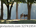 사슴, 동물, 나라 공원 32741954