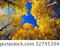 aspen, poplar, poplars 32745304