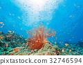 鹹水魚 海水魚 海魚 32746594