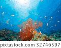 미야코지마, 물고기, 바다 32746597