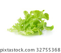 Green leaves lettuce isolated on white background 32755368