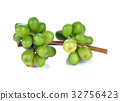 asia, bean, bush 32756423