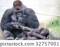 大猩猩 哺乳動物 猭 32757001