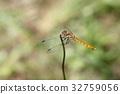 红蜻蜓 各种红蜻蜓 蜻蜓 32759056