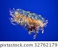 水母 海蜇 美杜莎 32762179