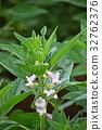 참깨 꽃 32762376