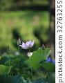 蓮花 花朵 花 32763255