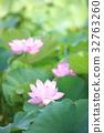 莲花 花朵 花卉 32763260
