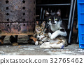 cat cats kitty 32765462