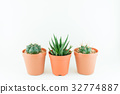 cactus, cacti, succulent 32774887