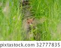 Summer Child Fox 5 32777835