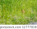 Summer Child Fox 8 32777838