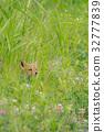 Summer's Fox 9 32777839