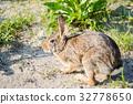 토끼, 동물, 풍경 32778650