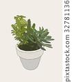indoor plants in pots 32781136