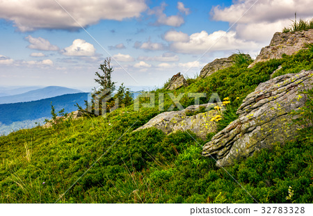 spruce tree on a mountain hill side 32783328
