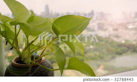 Green plant in pot on window with view outside. 32788443