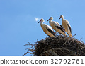 Three storks in the nest 32792761