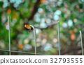 蝴蝶 轉換 翅膀 32793555
