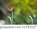 蝴蝶 轉換 翅膀 32793557