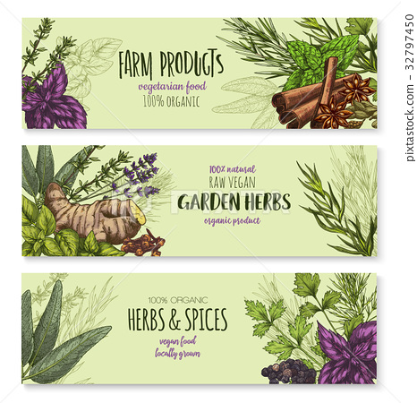Vector Banners Set Of Natural Spices And Herbs Stock Illustration 32797450 Pixta