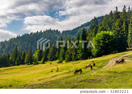 Horses by the road near the forest 32803221