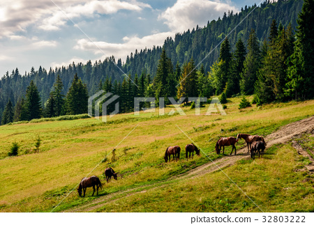 Horses by the road near the forest 32803222