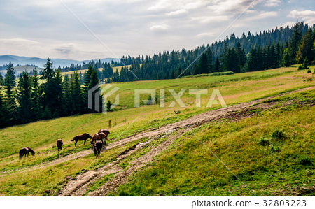 Horses by the road near the forest 32803223