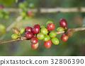 bean, branch, coffee 32806390
