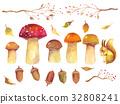Autumn plant illustration 32808241